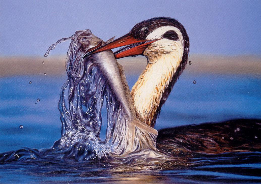 Figure 1. Reconstitution d'Hesperornis, l'un des deux oiseaux à dents étudié. © Courtoisie Imgur. http://imgur.com/gallery/WiIHp