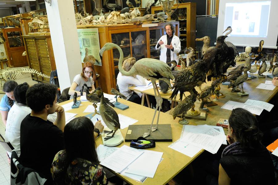 Tp de Zoologie  Eric Le Roux